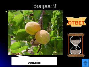 Вопрос 9 В Древнем Риме их называли «невиданно вкусные оранжевые армянские яб
