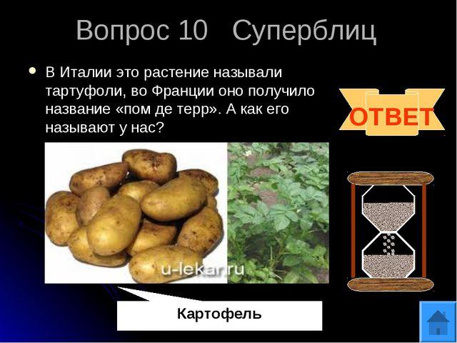 Вопрос 10 Суперблиц В Италии это растение называли тартуфоли, во Франции оно...