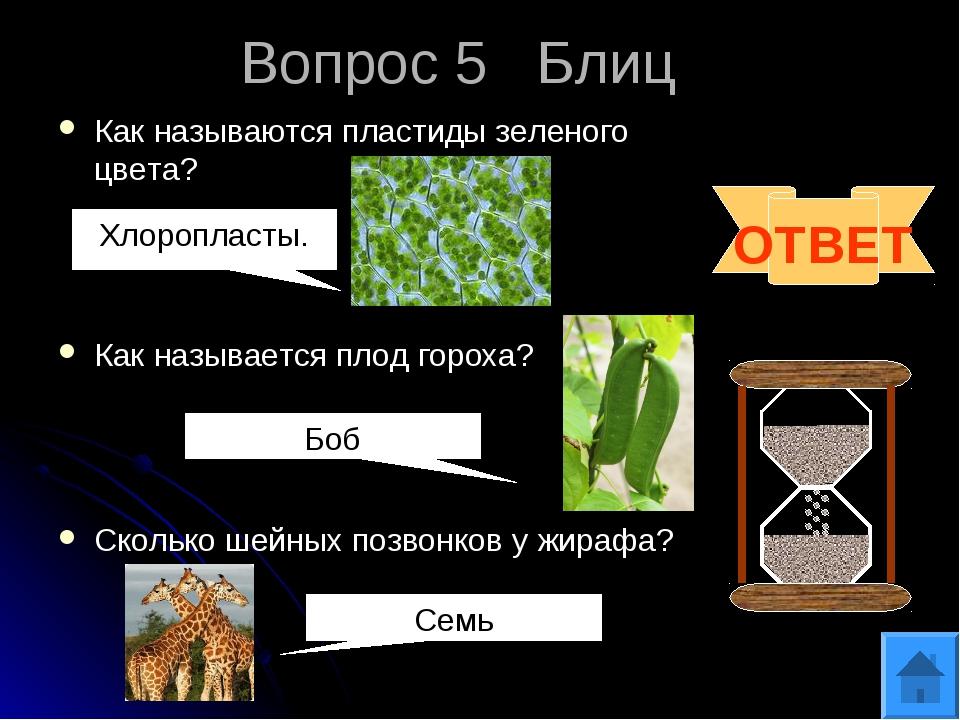 Вопрос 5 Блиц Как называются пластиды зеленого цвета? Как называется плод гор...