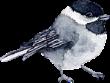 D:\Crash\для презентаций иоформления\картинки школа\клипарт птицы\0_74f92_a1ef4148_S.png