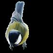 D:\Crash\для презентаций иоформления\картинки школа\клипарт птицы\0_74f54_fd68579d_S.png