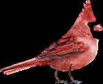 D:\Crash\для презентаций иоформления\картинки школа\клипарт птицы\0_74f99_d40e53bb_S.png