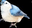 D:\Crash\для презентаций иоформления\картинки школа\клипарт птицы\0_74fa0_ecb35de_S.png