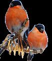 D:\Crash\для презентаций иоформления\картинки школа\клипарт птицы\0_74f78_899eca3b_S.png