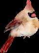 D:\Crash\для презентаций иоформления\картинки школа\клипарт птицы\0_74f94_327d6e83_S.png