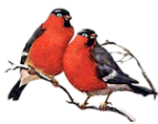 D:\Crash\для презентаций иоформления\картинки школа\клипарт птицы\0_74f57_e96db78e_S.png