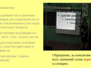 2.1 . Актуализация знаний о значении слова «корень» 1. Подземная часть расте