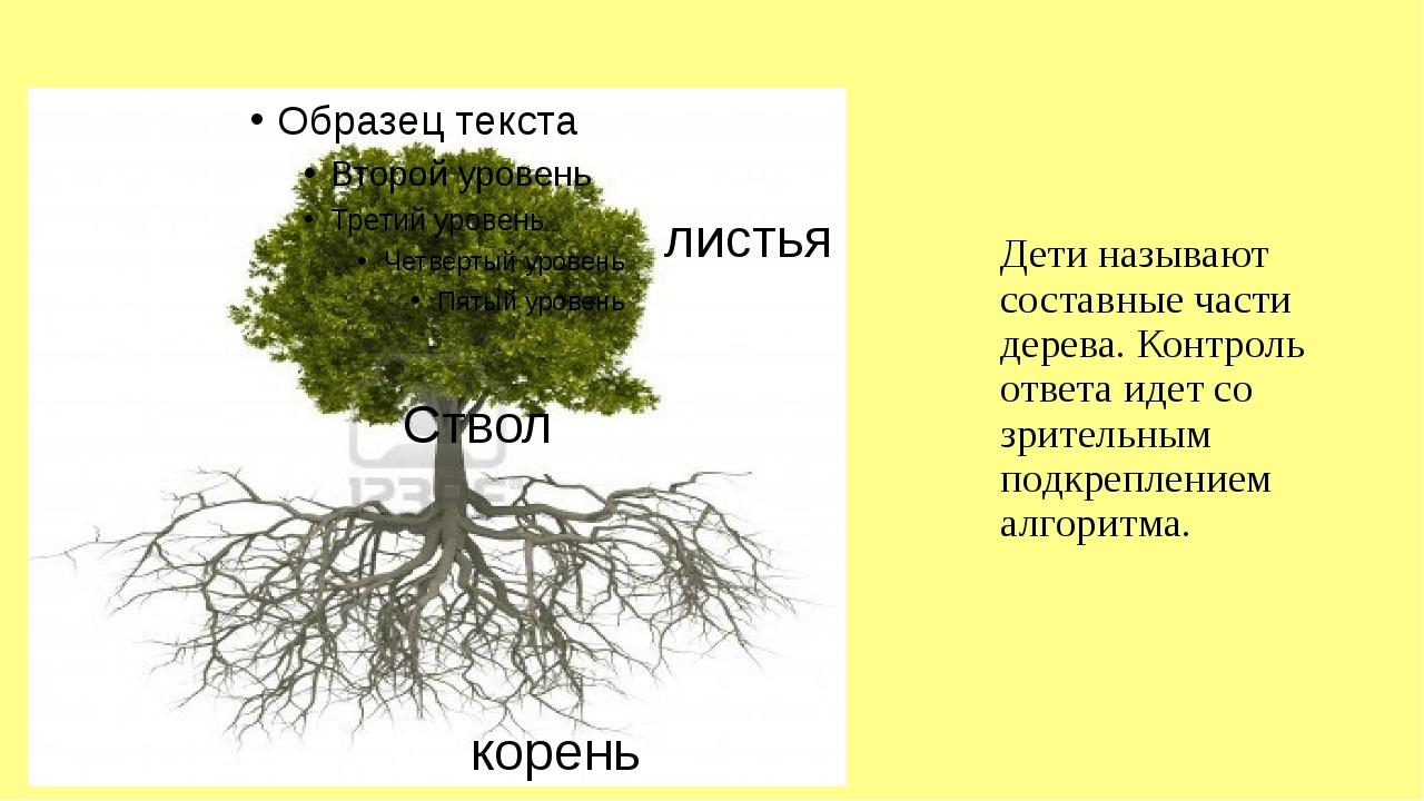 Дети называют составные части дерева. Контроль ответа идет со зрительным подк...
