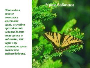Урок бабочки Однажды в коконе появилась маленькая щель, случайно проходивший