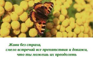 Живи без страха, смело встречай все препятствия и докажи, что ты можешь их пр
