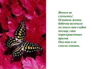 Ничего не случилось! Остаток жизни бабочка волочила по земле свое слабое тель