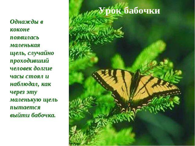 Урок бабочки Однажды в коконе появилась маленькая щель, случайно проходивший...