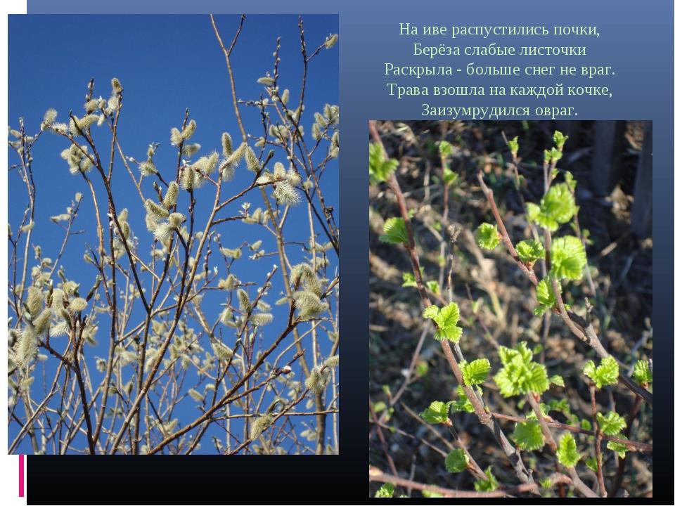 На иве распустились почки, Берёза слабые листочки Раскрыла - больше снег не в...