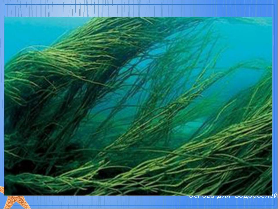 Приемы работы с бумагой Основа для водорослей