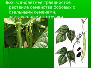 Боб- Однолетнее травянистое растение семейства бобовых с овальными семенами,