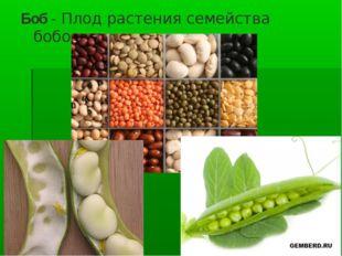 Боб- Плод растения семейства бобовых