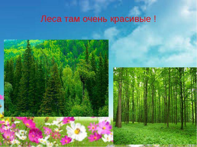 Леса там очень красивые !