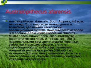 Australopithecus afarensis Australopithecus afarensis Вост. Африка, 4-3 млн.