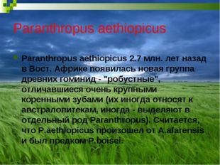 Paranthropus aethiopicus Paranthropus aethiopicus 2.7 млн. лет назад в Вост.