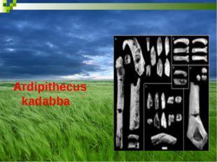 Ardipithecus kadabba