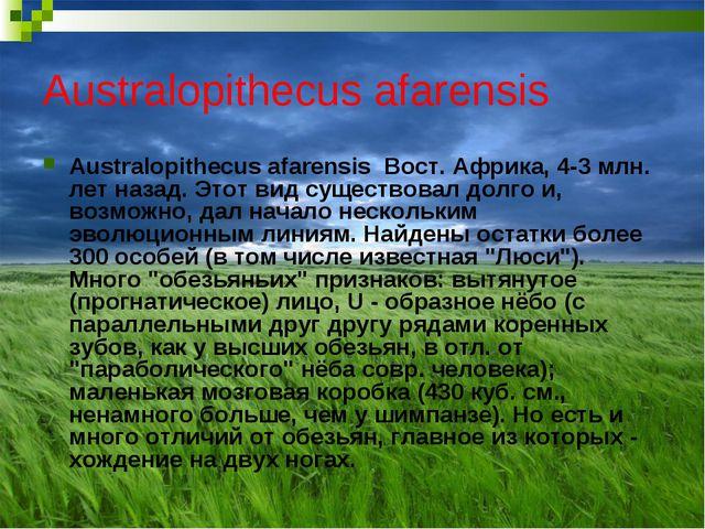 Australopithecus afarensis Australopithecus afarensis Вост. Африка, 4-3 млн....