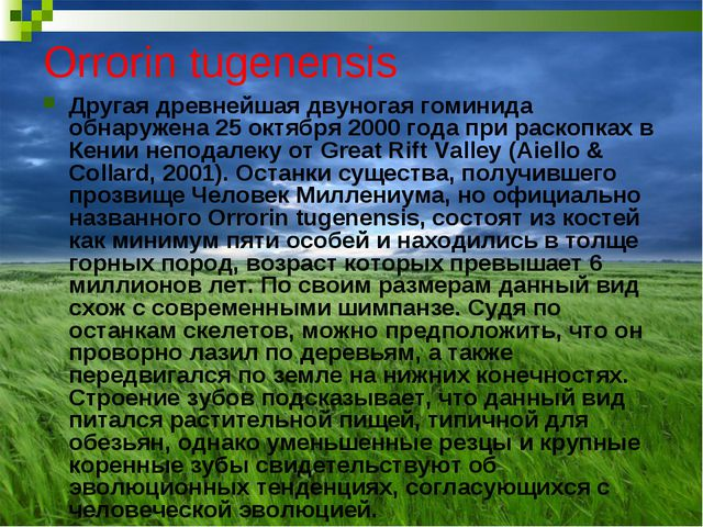 Orrorin tugenensis Другая древнейшая двуногая гоминида обнаружена 25 октября...