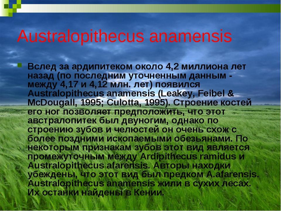 Australopithecus anamensis Вслед за ардипитеком около 4,2 миллиона лет назад...