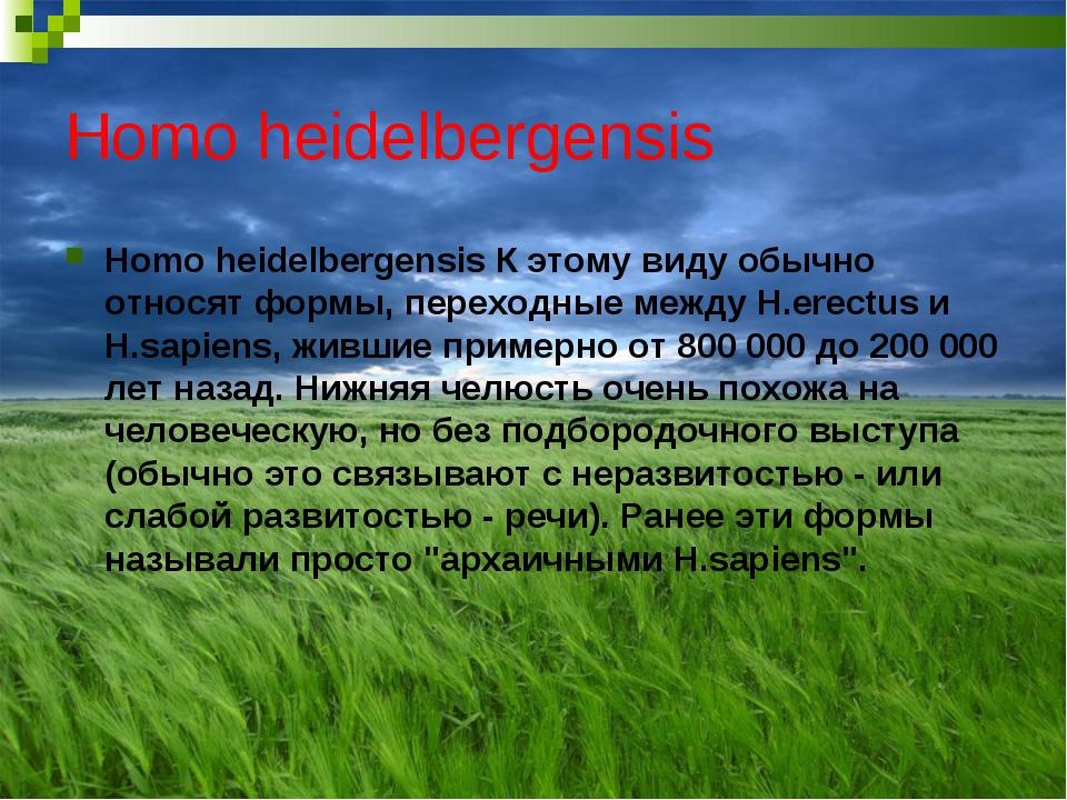 Homo heidelbergensis Homo heidelbergensis К этому виду обычно относят формы,...
