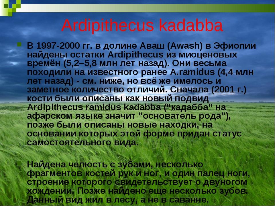 Ardipithecus kadabba В 1997-2000 гг. в долине Аваш (Awash) в Эфиопии найдены...