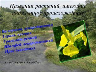 Названия растений, имеющие иноязычное происхождение Валериана лекарственная Г