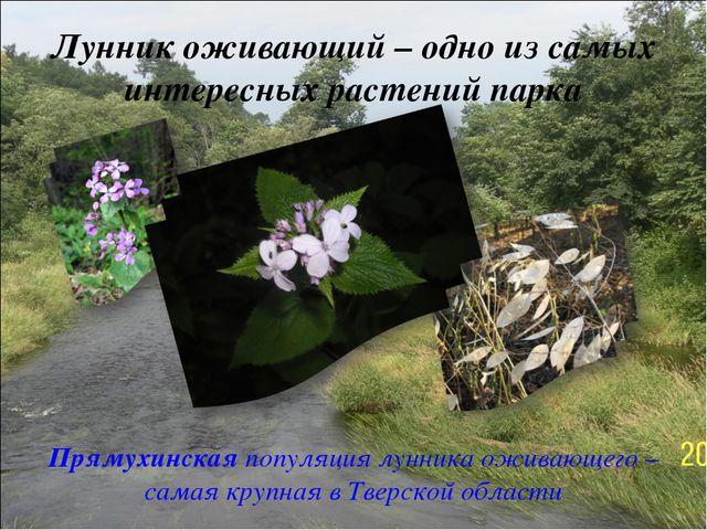 Лунник оживающий – одно из самых интересных растений парка Прямухинская попул...