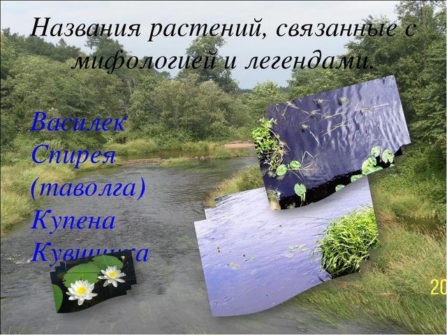 Названия растений, связанные с мифологией и легендами. Василек Спирея (таволг...