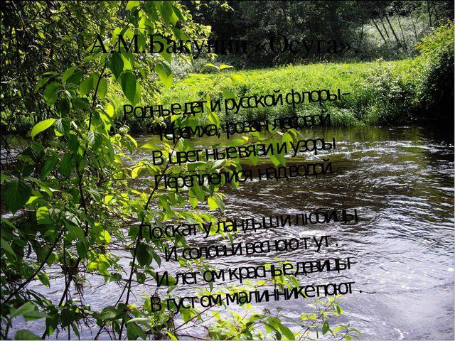 А.М.Бакунин «Осуга». Родные дети русской флоры – Черемха, розан лесовой В цве...