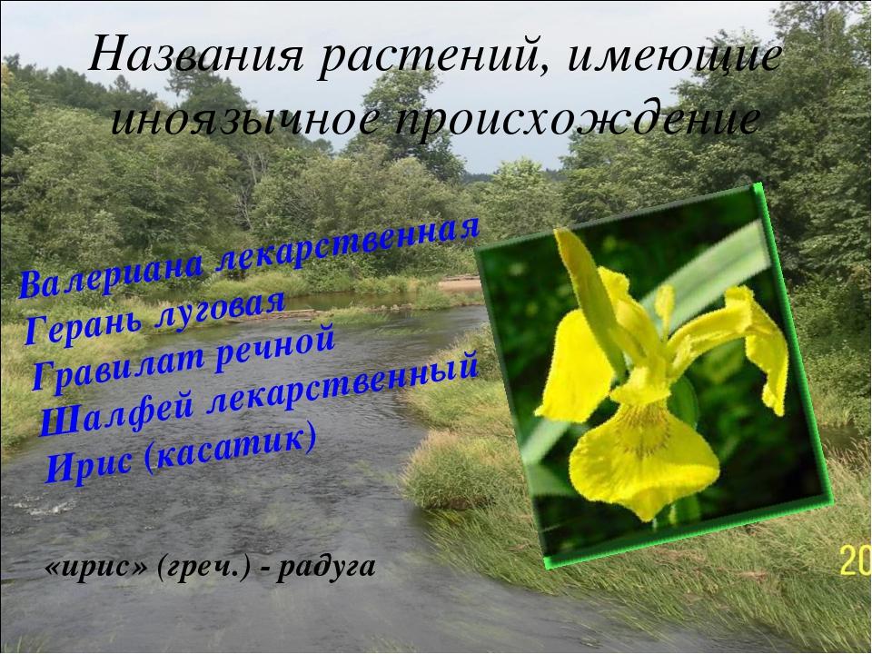 Названия растений, имеющие иноязычное происхождение Валериана лекарственная Г...