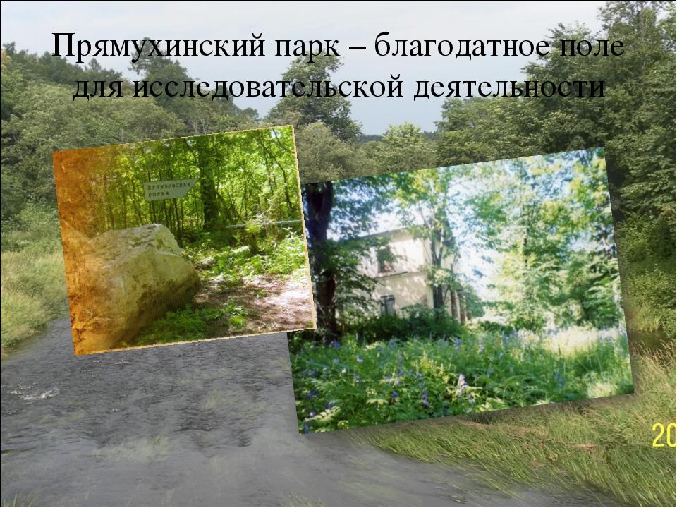 Прямухинский парк – благодатное поле для исследовательской деятельности