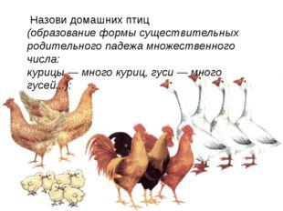 Назови домашних птиц (образование формы существительных родительного падежа