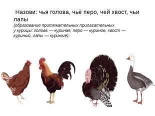 Назови: чья голова, чьё перо, чей хвост, чьи лапы (образование притяжательны