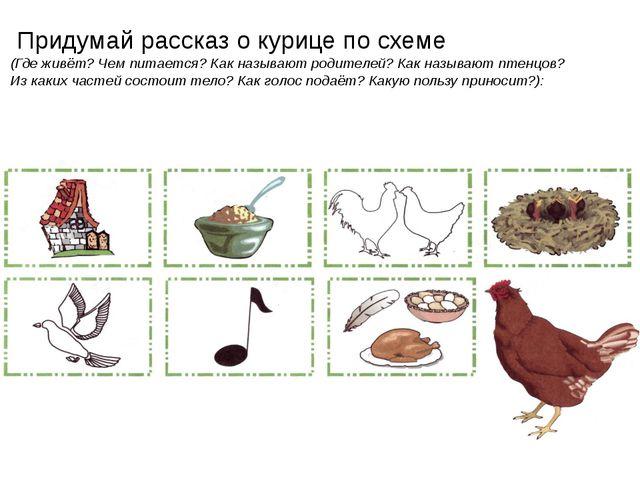 Придумай рассказ о курице по схеме (Где живёт? Чем питается? Как называют ро...
