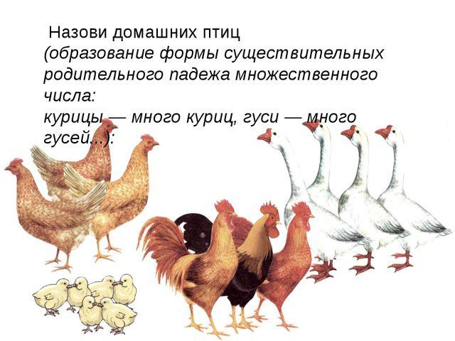 Назови домашних птиц (образование формы существительных родительного падежа...