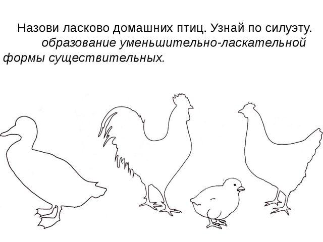 Назови ласково домашних птиц. Узнай по силуэту. образование уменьшительно-ла...