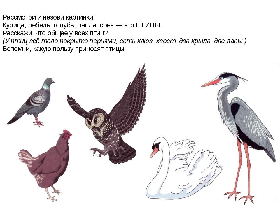 Рассмотри и назови картинки: Курица, лебедь, голубь, цапля, сова — это ПТИЦЫ....