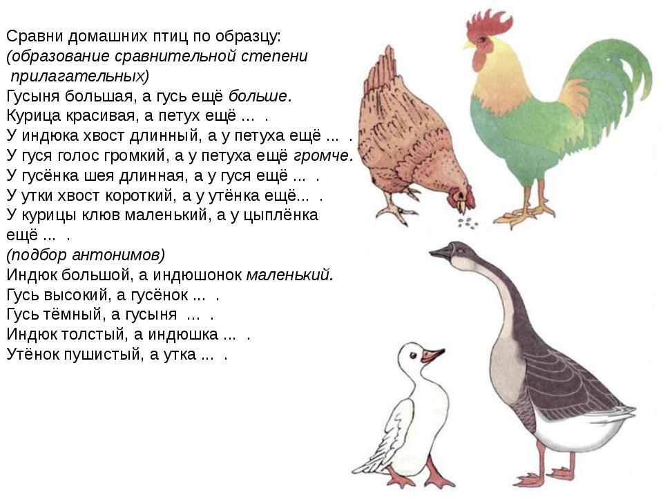 Сравни домашних птиц по образцу: (образование сравнительной степени прилагат...
