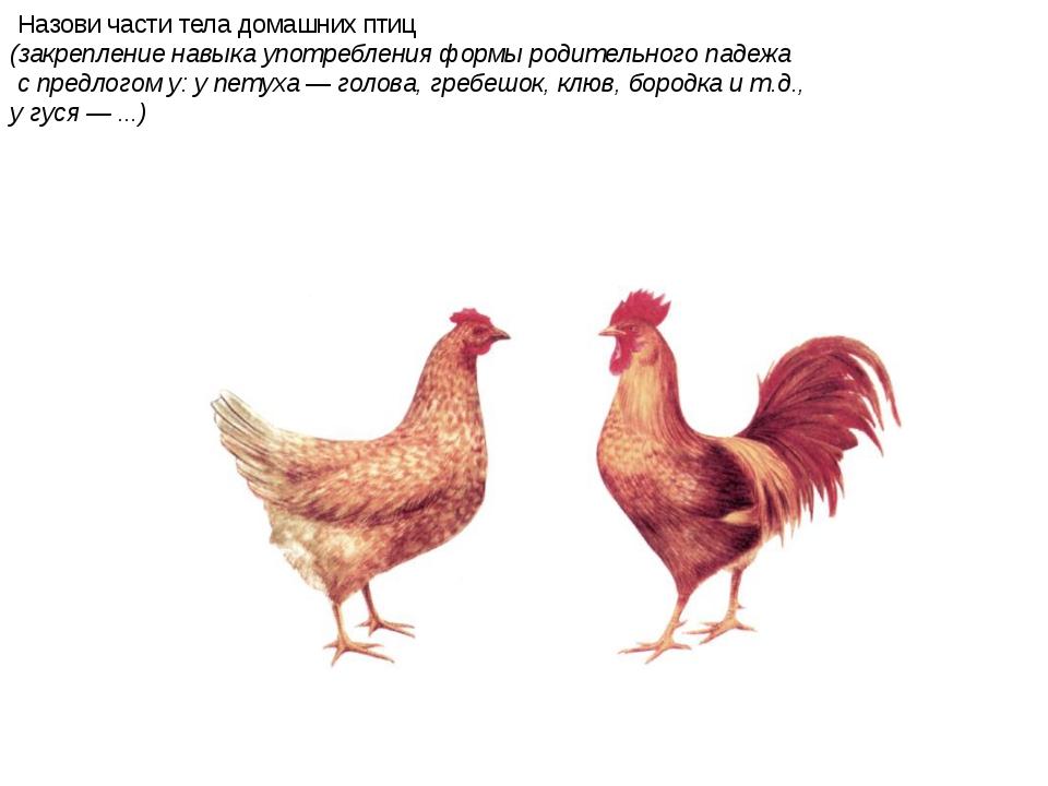 Назови части тела домашних птиц (закрепление навыка употребления формы родит...