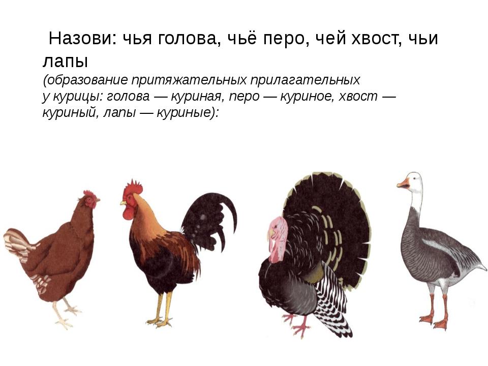 Назови: чья голова, чьё перо, чей хвост, чьи лапы (образование притяжательны...