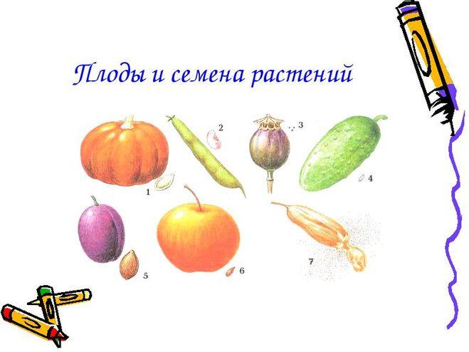 http://cdn01.ru/files/users/images/86/79/8679a54a111e08d303b0270bb5eea7c5.jpg