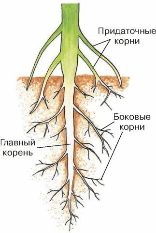 http://fictionbook.ru/static/bookimages/12/86/55/12865583.bin.dir/h/i_004.jpg