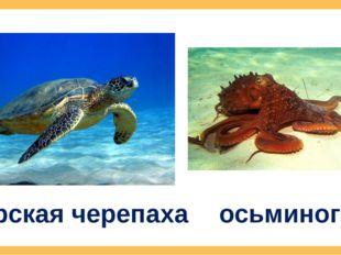 морская черепаха осьминог