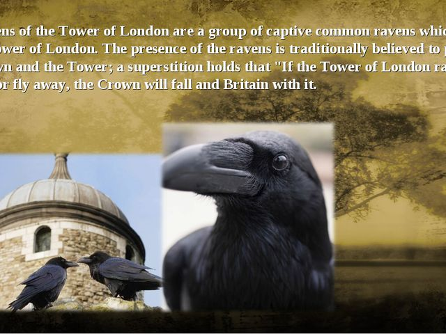 The ravens of the Tower of London are a group of captive common ravens which...