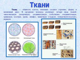 Ткань — общность клеток, имеющих сходное строение, форму и жизненный цикл. В