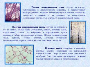 Рыхлая соединительная ткань состоит из клеток, разбросанных в межклеточном в
